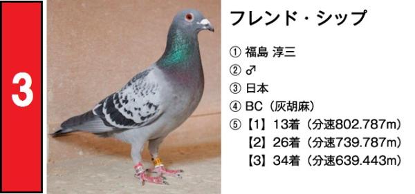 鳩 new 03 フレンド・シップ