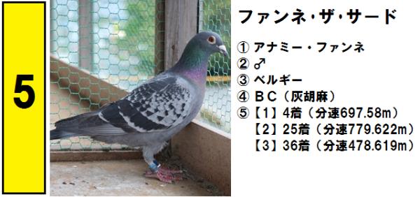 鳩 new 05 ファンネ・ザ・サード