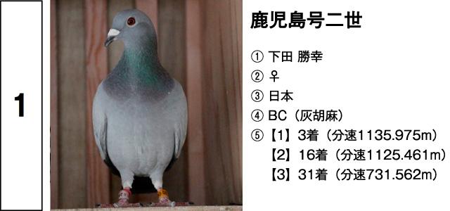 安住紳一郎の日曜天国 鳩