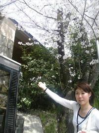 「工房ひしめき」を取材した時は桜が満開でした