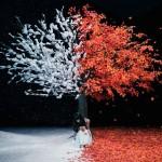 Aimer「茜さす/everlasting snow」(通常盤)SECL-2070