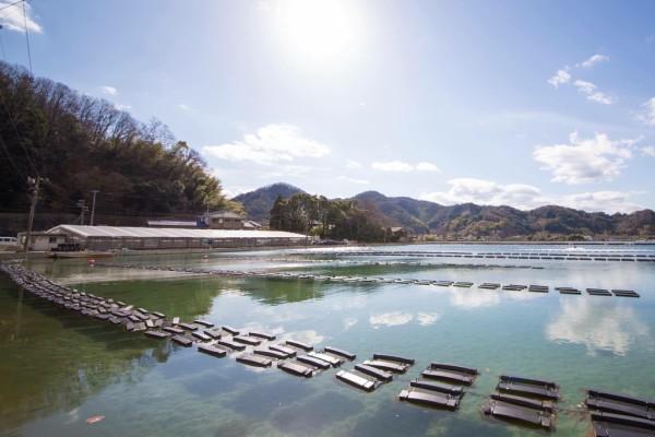 オイスターぼんぼんの養殖場。陸上にある珍しい牡蠣養殖場。