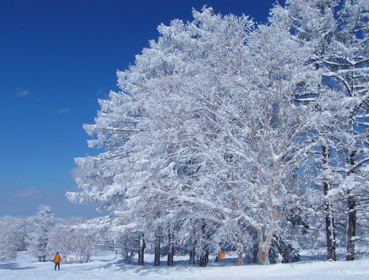 映画「疾風ロンド」の舞台となった野沢温泉スキー場。雪に覆われたこの森林のどこかに生物兵器が隠されているという設定で物語は進行する
