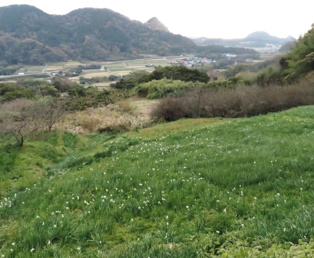 江月水仙ロードでは里山風景の中で、可憐な スイセンを楽しむことができる