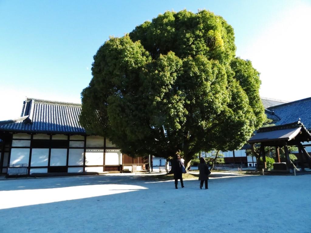 3月18日まで特別に公開されている二の丸御殿中庭。御殿の裏側にあたり簡素な造り