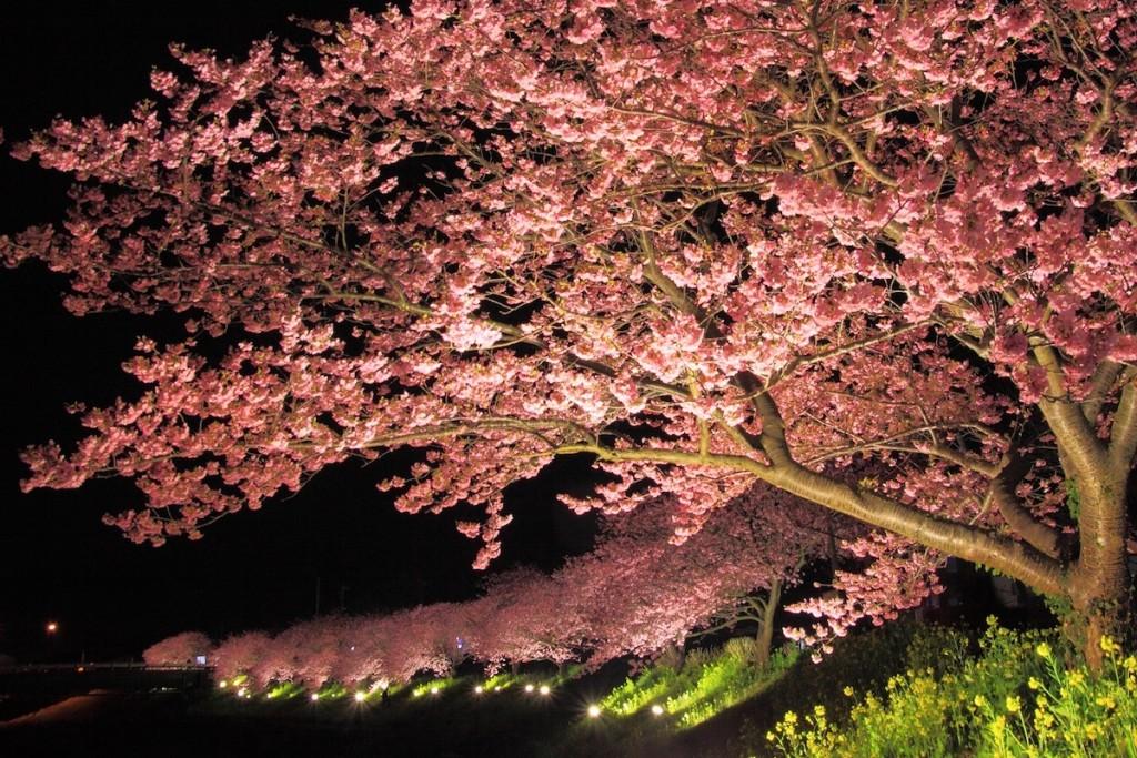 夕方6時から夜の9時まではライトアップされ、あでやかな花模様が闇の中に浮かび上がる