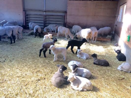 ▲羊だまりができる大部屋