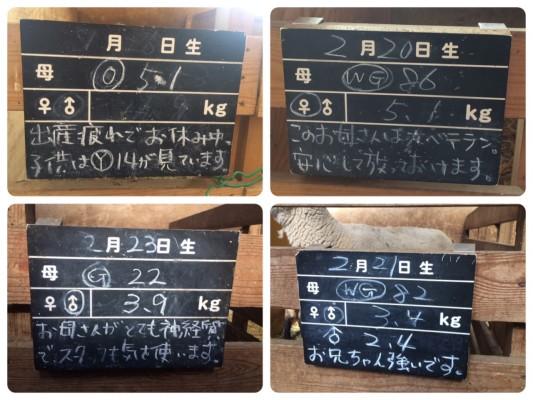 ▲愛と情報の黒板