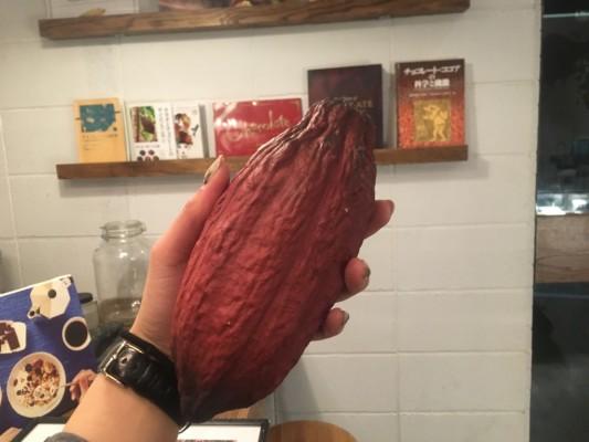 ▲カカオポッドの模型。これから50粒ほどのカカオ豆が採れる。