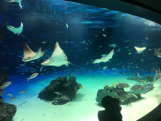 ▲サンシャイン水族館の髄一の大水槽「サンシャインラグーン」