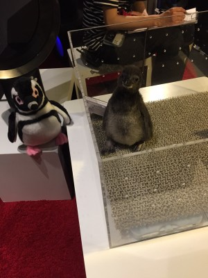 ▲生後1ヶ月ほどのペンギンの赤ちゃん(右ですよ)