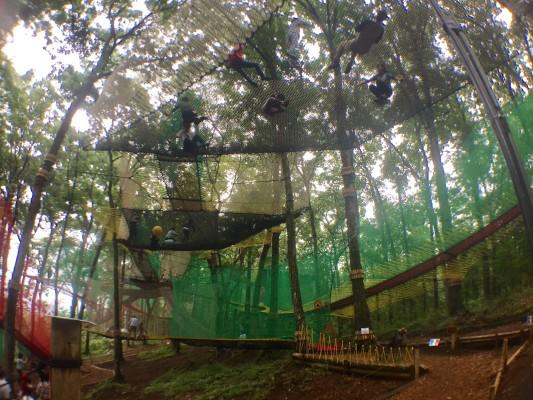 ▲網が森中に張り巡らされています。