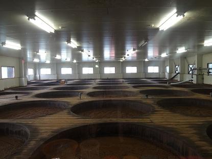 自然の環境で醤油造りを行う「麹室」38の木桶がぎっしり!