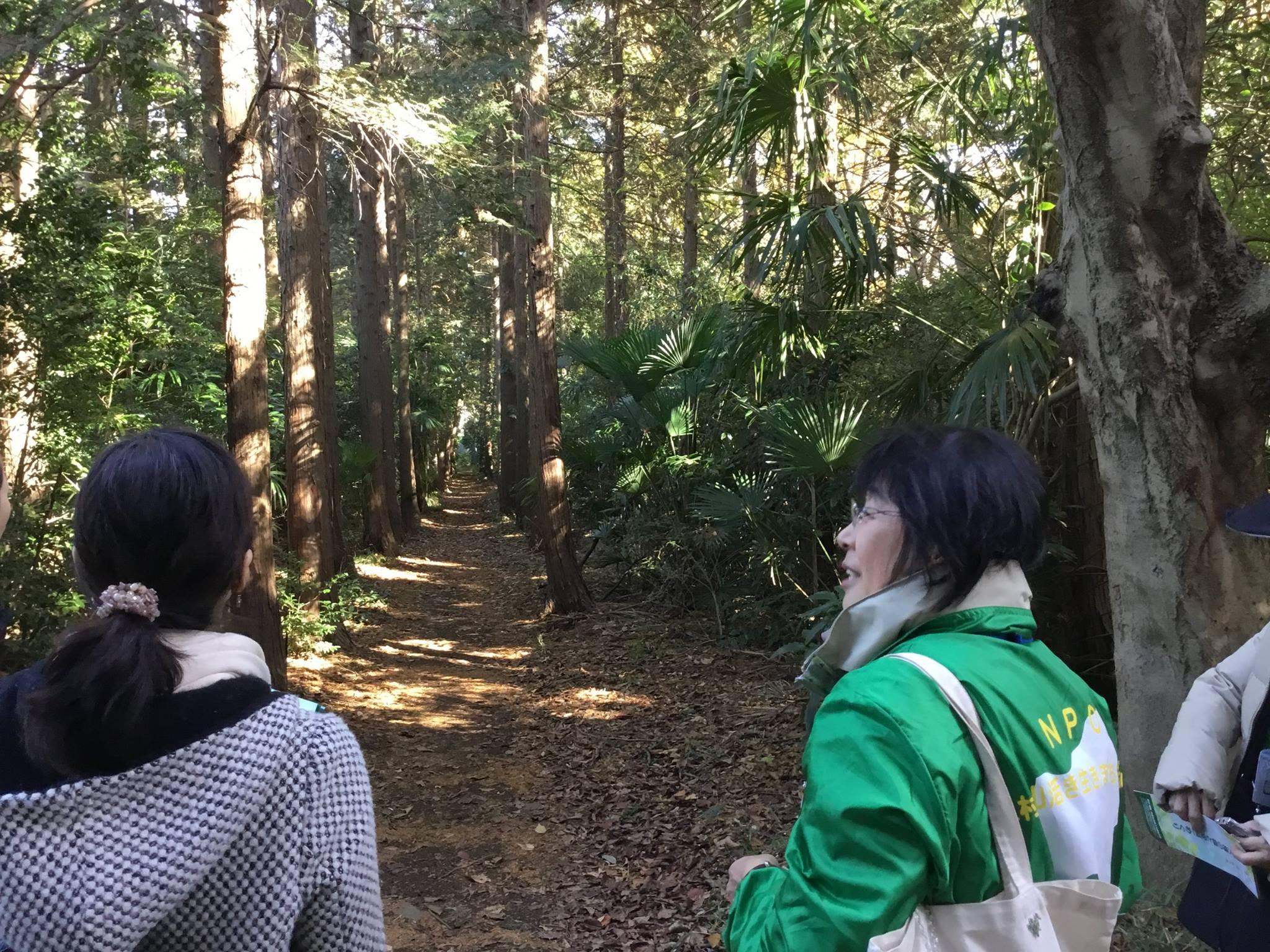 多磨全生園の森林浴道