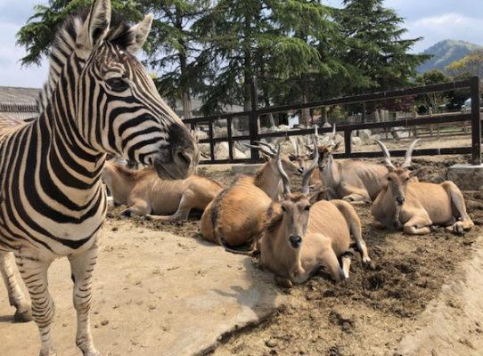 サファリパーク 群馬