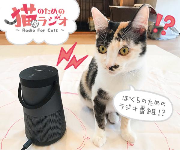 猫様ラジオ